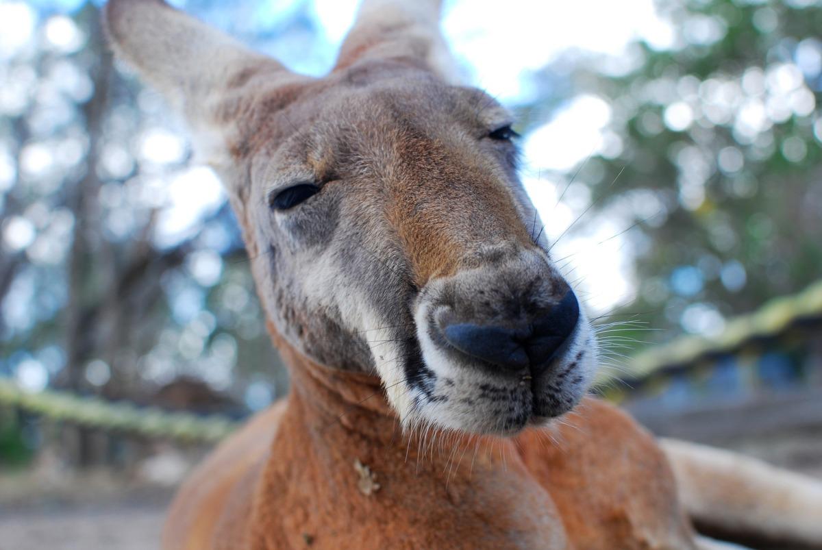 Kangaroo – OWPCChallenge