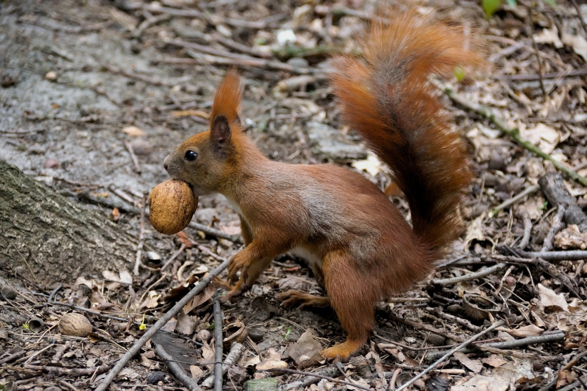 Squirrel and Sparrow