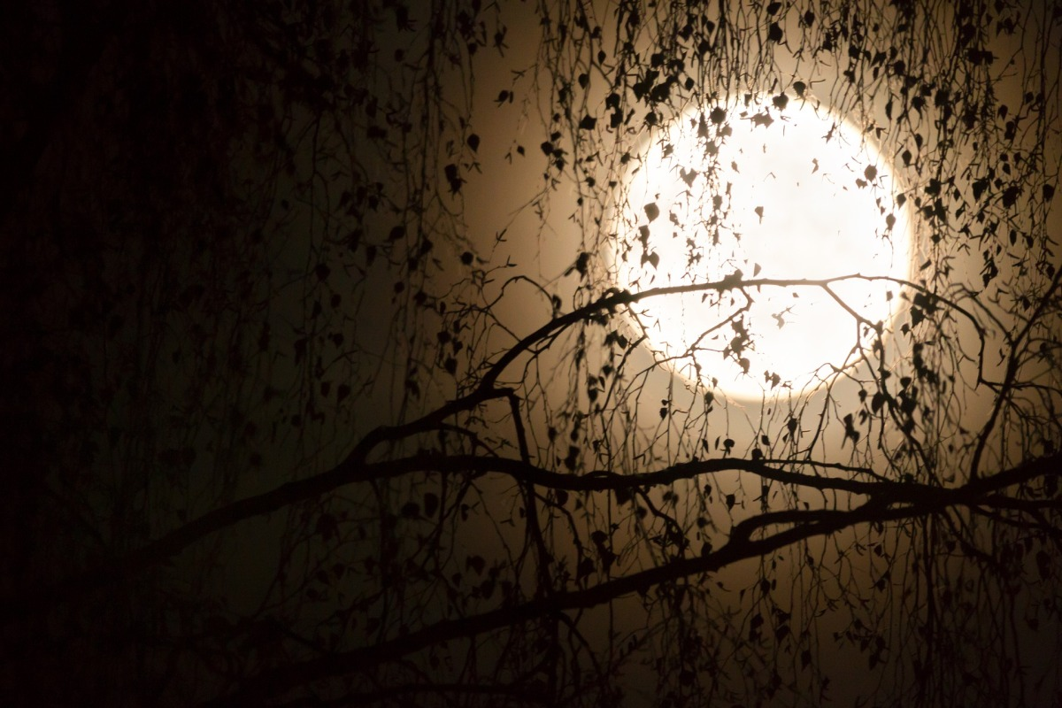 Moonstruck Repercussions – In the Dark6